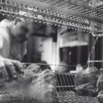 Breadway, le vie del pane portano a Matera